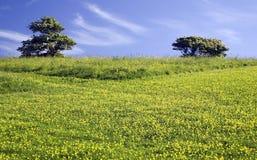 Grüne Wiese mit 2 Bäumen Lizenzfreie Stockfotografie