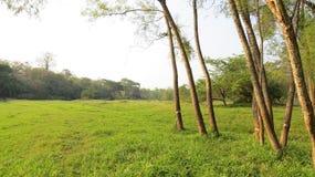 Grüne Wiese mit Bäumen lizenzfreie stockfotos
