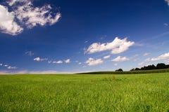 Grüne Wiese mit blauem Himmel Stockfotos