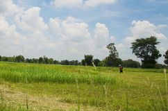 Grüne Wiese mit dem blauen Himmel Lizenzfreie Stockfotos