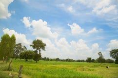 Grüne Wiese mit dem blauen Himmel Lizenzfreie Stockbilder