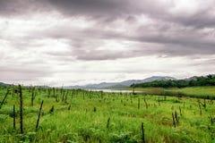 Grüne Wiese mit dem Stumpf bewölkt Stockfotografie