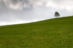 Grüne Wiese mit einem einzelnen Baum Lizenzfreie Stockbilder