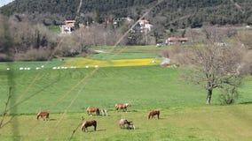 Grüne Wiese mit einigen Pferden stock video