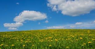 Grüne Wiese mit Löwenzahn und Himmel mit Wolken Stockbild