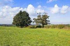 Grüne Wiese mit reifen Bäumen Stockfotos