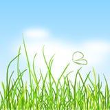 Grüne Wiese mit Schmetterling Stock Abbildung