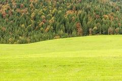 Grüne Wiese mit Wald im Hintergrund lizenzfreie stockbilder