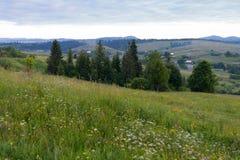 Grüne Wiese neigt sich mit wachsenden Wildflowers gegen den Hintergrund von Häusern von Dächern im Tal, das in sichtbar ist Lizenzfreie Stockfotos
