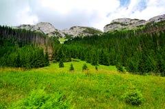 Grüne Wiese am Rand des Waldes Lizenzfreie Stockfotos