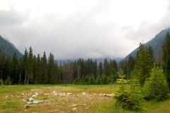 Grüne Wiese am Rand des Waldes Stockfotografie