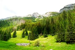 Grüne Wiese am Rand des Waldes Stockbild