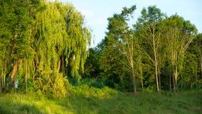 Grüne Wiese am sonnigen Tag Stockfoto