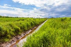 Grüne Wiese und bewölkter Hintergrund Stockbild