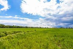Grüne Wiese und bewölkter Hintergrund Stockfotografie