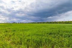 Grüne Wiese und bewölkter Hintergrund Lizenzfreie Stockfotografie