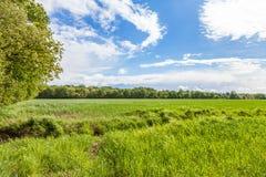 Grüne Wiese und bewölkter Hintergrund Lizenzfreie Stockfotos
