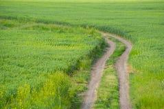 Grüne Wiese und ein Schotterweg Stockbild
