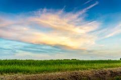 Grüne Wiese und schöner Himmel Lizenzfreie Stockfotografie