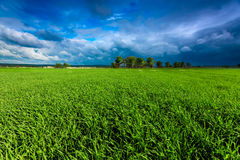 Grüne Wiese und stürmischer Himmel Lizenzfreie Stockfotografie