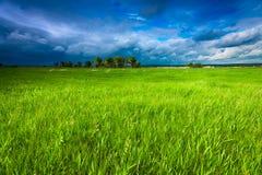 Grüne Wiese und stürmischer Himmel Stockfotos
