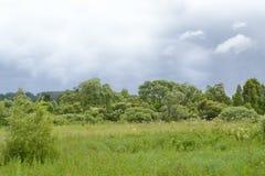 Grüne Wiese und Strauch Stockfotografie