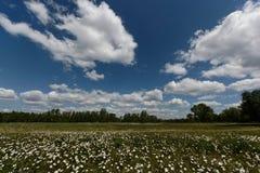 Grüne Wiese unter blauem Himmel mit Wolken Stockfotografie