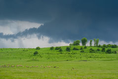 Grüne Wiese unter dem Donner-Himmel Stockfotos