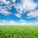 Grüne Wiese unter einem blauen Himmel lizenzfreie stockbilder