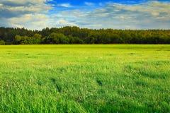 Grüne Wiese, Wald und blauer Himmel Stockbilder