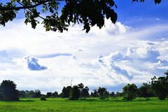 Grüne Wiese, weiße Wolken, blauer Himmel, schön Stockbilder