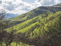 Grüne Wiesen auf Bergen mit Eichen stockfotografie