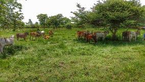 Grüne Wiesen, glückliche Tiere Lizenzfreies Stockfoto