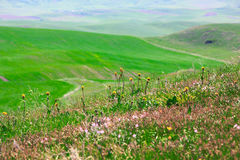 Grüne Wiesen mit Blumen Stockfotos