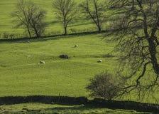 Grüne Wiesen und Bäume, Höchstbezirk, England, Großbritannien stockbild