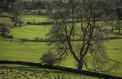 Grüne Wiesen und schwarze Bäume, Höchstbezirk, England lizenzfreie stockbilder
