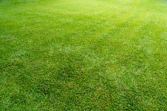 Grüne Wiesenrasenfläche für Hintergrund stockfotografie