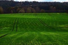 Grüne Wolldecke #3 Stockbilder