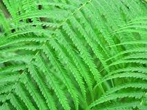 Grüne Zeile lizenzfreies stockfoto
