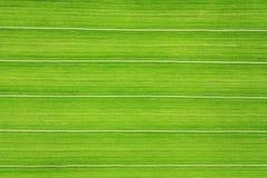 Grüne Zeile Stockbilder