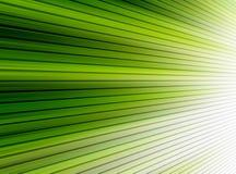 Grüne Zeilen Stockfoto