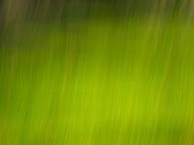 Grüne Zeilen Stockbilder