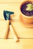 Grüne Zimmerpflanzen in den braunen Tongefäßen auf einem alten hölzernen Hintergrund Succulent Gartenarbeithilfsmittel neu, Stock Lizenzfreies Stockbild