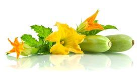 Grüne Zucchiniblätter und -blume Stockbild
