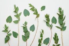 Grüne Zusammensetzung von Niederlassungen mit Blättern Stockbild