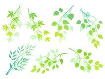 Grüne Zweige lizenzfreie abbildung