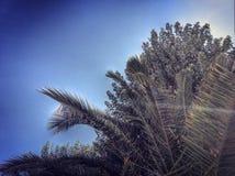 grüne Zweige Stockbild