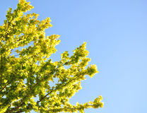 Grüne Zweige eines Baums Lizenzfreie Stockfotos