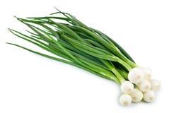 Grüne Zwiebel auf weißem Hintergrund Lizenzfreie Stockfotografie