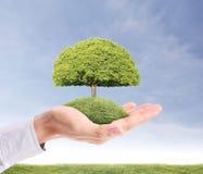 Grünen Baum in der Hand halten Stockbild